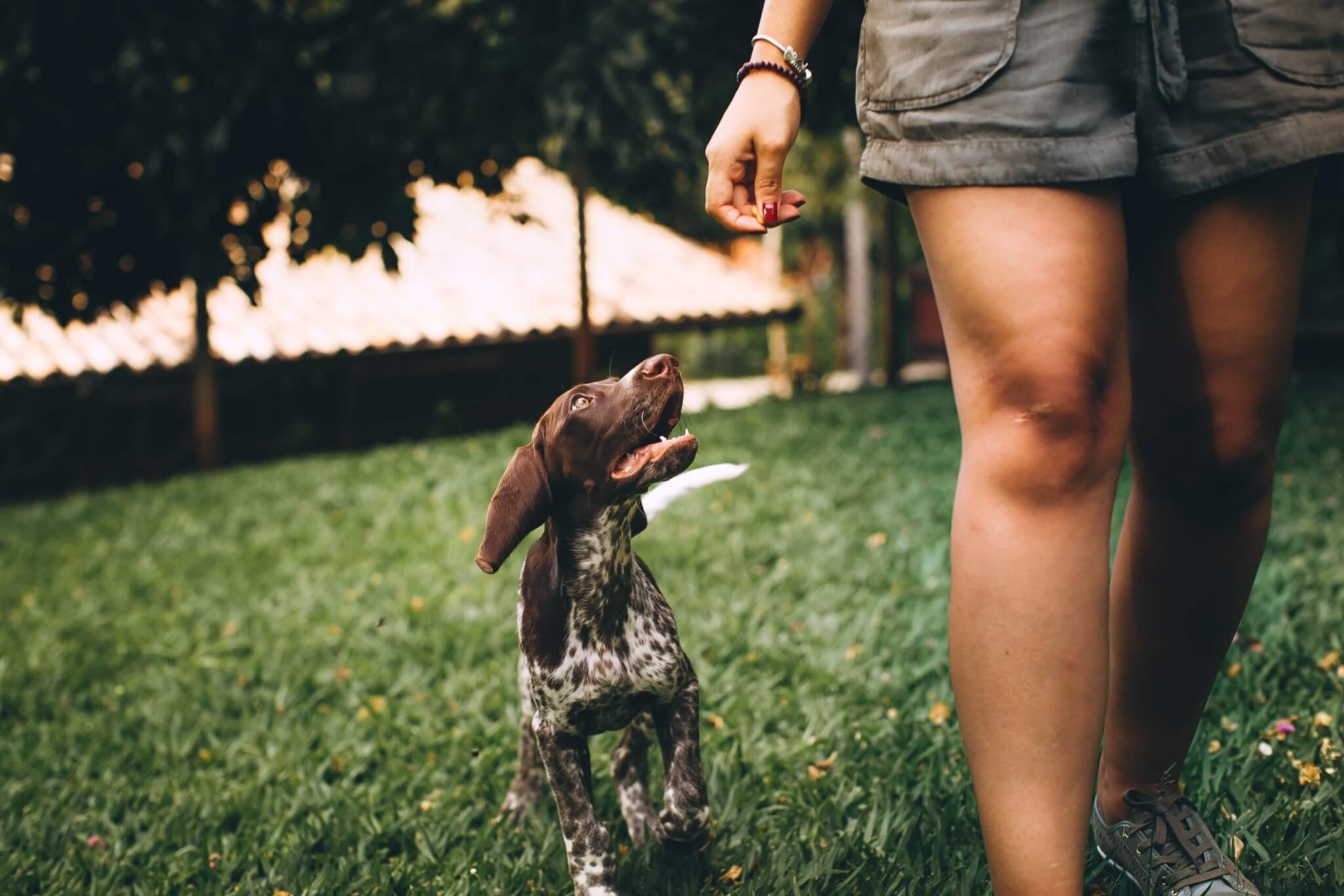 Think carefully about your pet policy before drafting a basic rental agreement.